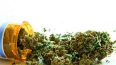 Cannabis aus der Apotheke: Was ändert sich mit der Agentur? (Foto: Atomazul / Fotolia)