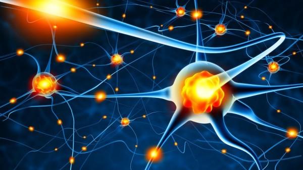 Ein neuronaler Regelkreis lässt Ältere im Stich