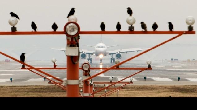 Aus der Luftfahrt in die Apotheken-Offizin: in andern Hochrisikobranchen sind Fehlermeldesysteme bereits etabliert. (Foto: picture alliance / AP Images)