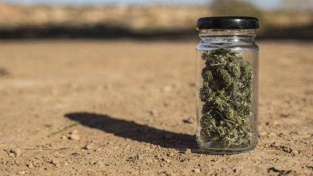 Noch immer muss Medizinalcannabis für den deutschen Markt mehrheitlich importiert werden. (Foto: IMAGO / Westend61)