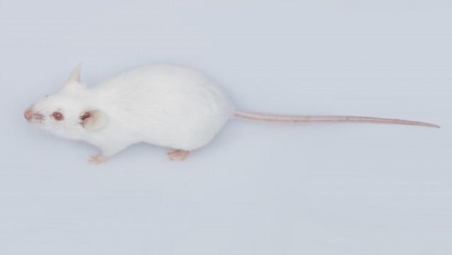Im Tierversuch war Trazodon bei neurodegenerativen Erkrankungen vielversprechend. In der Apotheke begegnet einem die Substanz bislang eher selten. (Foto:Tran-Photography / Fotolia)