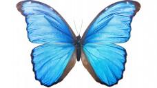"""Mittel für die Schilddrüse, die wegen ihrer Form auch """"Schmetterlingsorgan""""  genannt wird, dürfen in der Apotheke nicht ausgetauscht werden. (Foto: Sailorr / Fotolia)"""