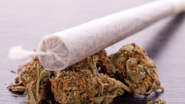 Kein Cannabis am Gewehr, findet der Bayersiche Verwaltungsgerichtshof. (Foto: Juniart / adobe.stock.com)