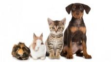 Auch Haustiere können in der Apotheke Hilfe finden. (Foto: DoraZett/Fotolia)