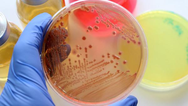 Mehrheit kennt resistenten Durchfallerreger Campylobacter nicht