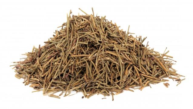 Das Ephedrakraut wird in der Traditionellen Chinesischen Medizin unter anderem bei Lungenerkrankungen eingesetzt. (Foto: marilyn barbone)
