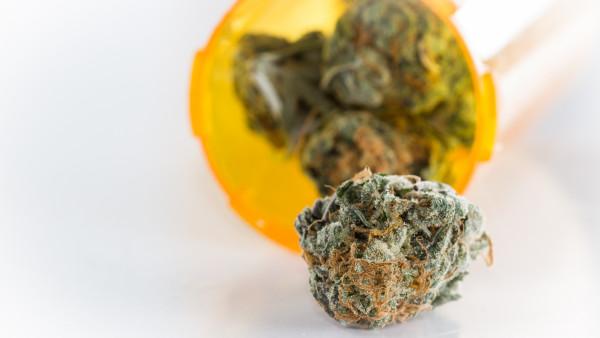 6600 Kilogramm Cannabis für vier Jahre