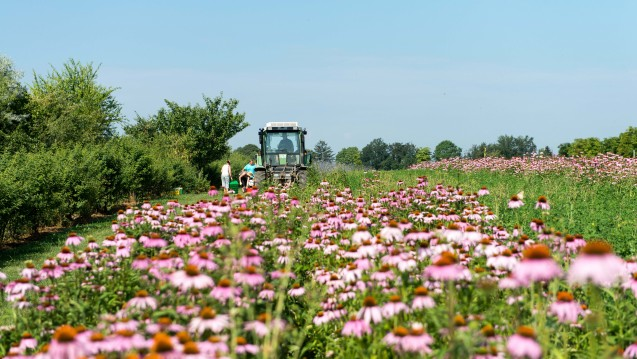 Nicht nur das Echinacea Feld, auch die Weleda AG blieb 2014 auf Wachstumskurs. (Foto: Weleda)