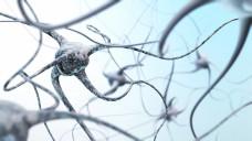 Drängt Ocrelizumab die Basistherapeutika bei MS in den Hintergrund? (Foto: ustas / stock.adobe,com)