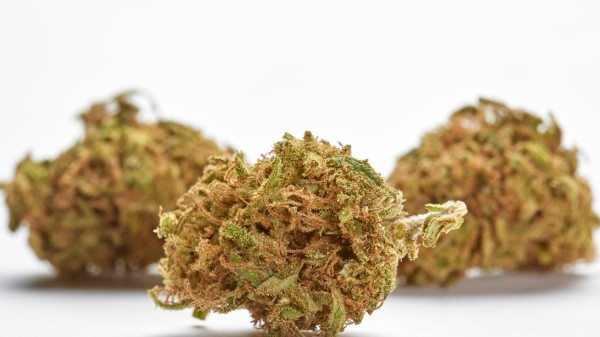 Cannabisblüten – ein therapeutischer Rückschritt?
