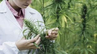 Basel prüft Cannabis-Konsum aus Apotheken