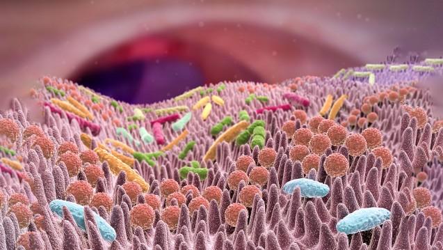 Die Darmflora beeinflusst die Wirkung von Arzneistoffen, anscheinend auch die der Checkpoint-Inhibitoren. (Foto: Alex / stock.adobe.com)