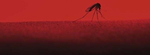Zika – ein Jahr danach
