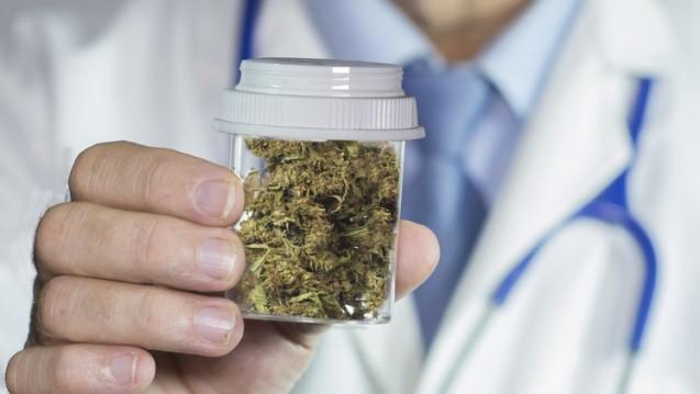 Der Vergabesenats am OLG Düsseldorf hat der BfArM-Ausschreibung zum Cannabis-Anbau einen Strich durch die Rechnung gemacht. (Foto: William Casey / stock.adobe.com)