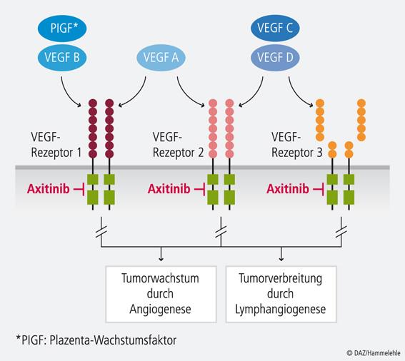 Abb. Angiogenese