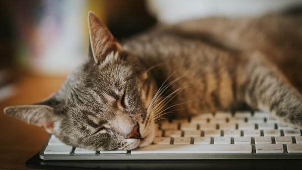COVID-19: Meldepflicht für Haustiere geplant