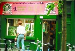 D0909_ls_cannabis.jpg
