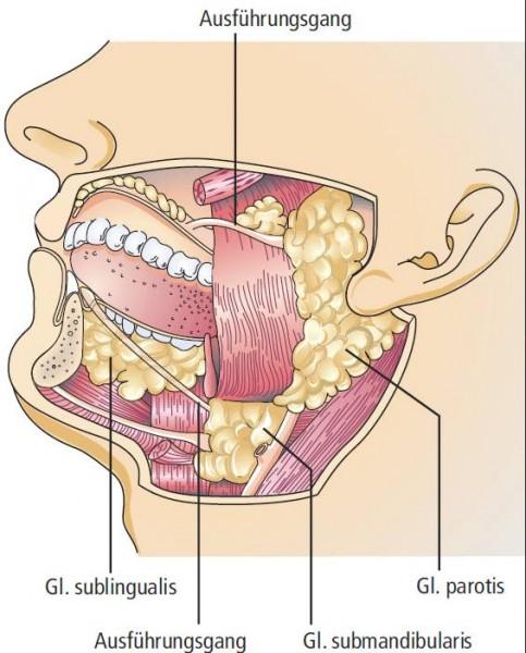 Speichel ist wichtig zum Erhalt der Zähne
