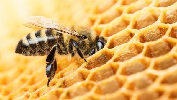 Menschen nutzen Bienen schon seit 9000 Jahren