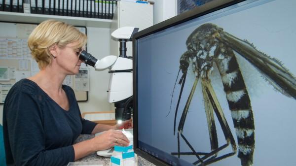 Wissenschaftler im Kampf gegen Stechmücken