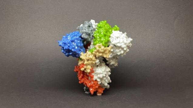 SARS-CoV-2 (hier Viruspartikel als 3-D-Modell) nutzt das membrangebundene Enzym ACE2 als Eintrittspforte unter anderem in die Lungenzellen. Eine rekombinante lösliche Variante von Angiotensin Converting Enzyme 2 (rhACE2) wird nun in einer Studie als mögliche Therapie getestet. (t/Foto: imago images / ZUMA Wire)
