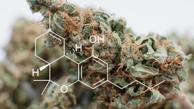 Tetrahydrocannabinol ist nur eines von mehr als hundert bekannten Cannabinoiden. Bei Schmerzpatienten kann THC offenbar die schmerzbedingte Missempfindung aus der Wahrnehmung rücken. (Foto: kirillvasilevcom / stock.adobe.com)