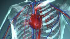 Die meisten Menschen sterben infolge von Erkrankungen des Herz-/Kreislaufsystems. (Foto: ap_i/Fotolia)