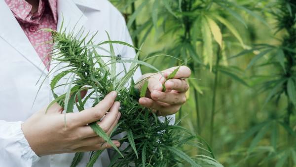 Kabinett beschließt Gesetz für Cannabis-Kostenerstattung