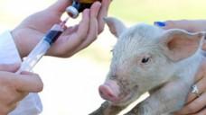 Jeder Einsatz von Antibiotika bei Tieren muss gemeldet werden. (Foto: Budimir Jevtic/Fotolia)