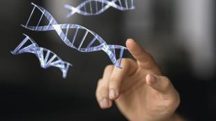 Genom-Editierung mit CRISPR-Cas9