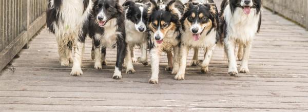 Tierkliniken immer mehr in Kettenhand