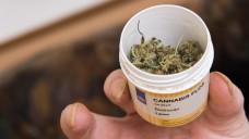 Eine Dose mit Cannabis. (Foto: Swen Pförtner / dpa)