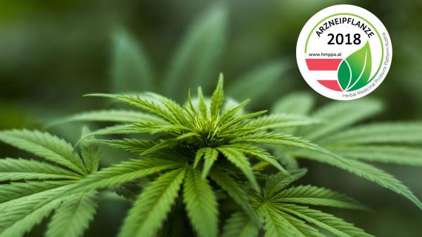 Cannabis sativa ist Arzneipflanze des Jahres 2018