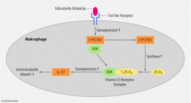 vitamin-d-04.eps
