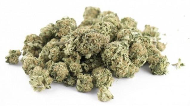 Jetzt ist die Arzneibuch-Monographie zu Cannabisblüten veröffentlicht. (Foto:Foto: rgbspace – Fotolia.com)