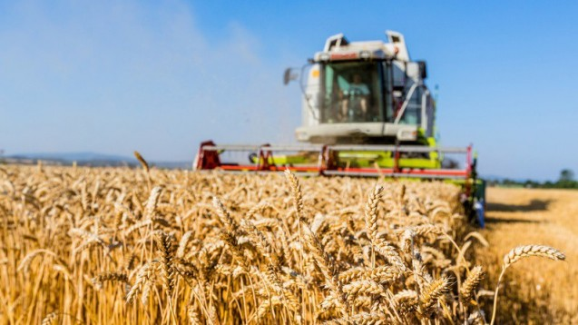 Glyphosat: Weltweit einer der am meisten eingesetzten Wirkstoffe in Pflanzenschutzmitteln. (Foto: Gina Sanders / Fotolia)