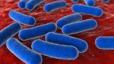 Insbesondere Krankenhaus-Apotheken kämpfen mit multiresistenten Bakterien. (Foto: Dimitar Marinov / Fotolia)