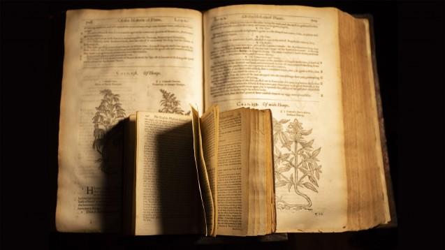 Die Geschichte von Cannabis als Medizin reicht tausende Jahre zurück: Erstmals als Heilmittel erwähnt wurde die Hanfpflanze etwa 2700 v. Chr. in einem chinesischen Arzneibuch. (Foto: John / stock.adobe.com)