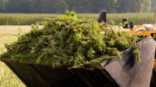 Der kanadische Cannabis-Produzent Wayland hat eine Vereinbarung geschlossen, derzufolge in den kommenden drei Jahren neun Tonnen Medizinalhanf nach Deutschland importiert werden sollen. ( r / Foto: Imago)