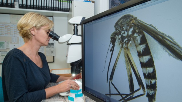 Besorgte Mücken-Forscherin: Doreen Walther vom Leibniz-Zentrum für Agrarlandschaftsforschung (ZALF) in Müncheberg.