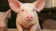 Das EU-Parlament verlangt, dass Rx-Tierarzneimittel künftig nur noch in Ausnahmefällen über das Internet bestellt und dann versendet werden dürfen. (j/ Foto:Simone van den Berg /stock.adobe.com)