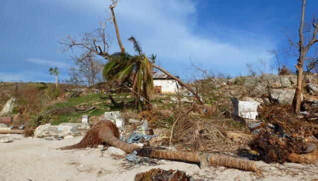 Entwurzelte Bäume am Strang von Haiti. (Foto: AoG)