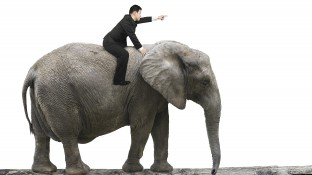 """How to move an elephant"""