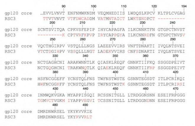 D4811_du_HIV_Abb4.jpg