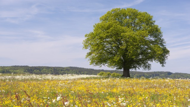 Getrübtes Sommeridyll: Für Heuschnupfen-Geplagte wird eine blühende Wiese schnell zur Qual. (Foto:Wolfilser / fotolia)