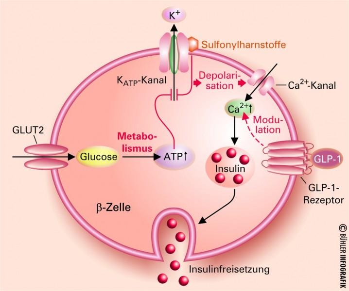 Diabetes: Therapie mit umprogrammierten Zellen? - FOCUS Online