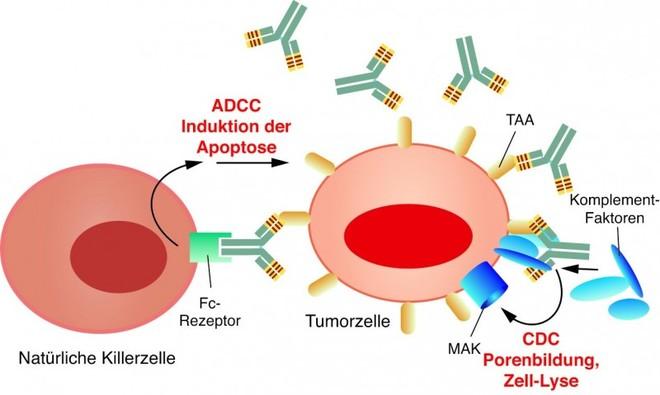 Krebs Mutation