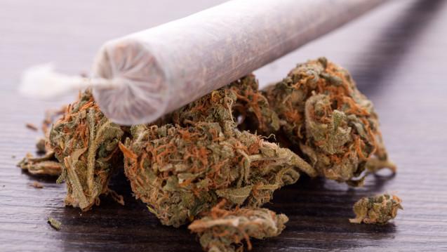 Cannabis soll nach Ansicht der Bundesregierung nicht legalisiert werden. (Foto: juniart / stock.adobe.com)