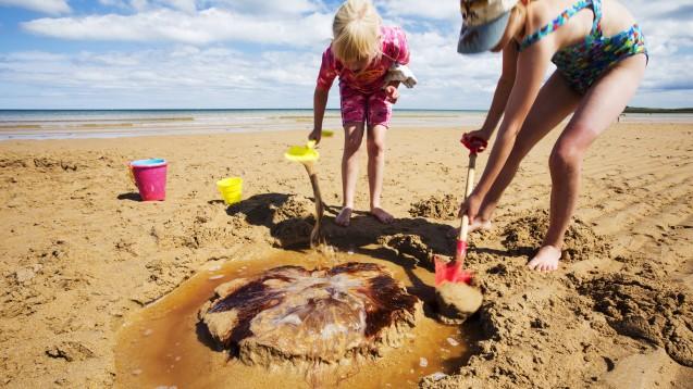 Auch leblos am Strand liegende Quallen sollte man nicht berühren. Ihre Nesselkapseln können noch aktiv sein. (x / Foto: imago images / Cavan Images)
