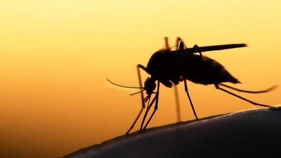 Bestes Mückenmittel